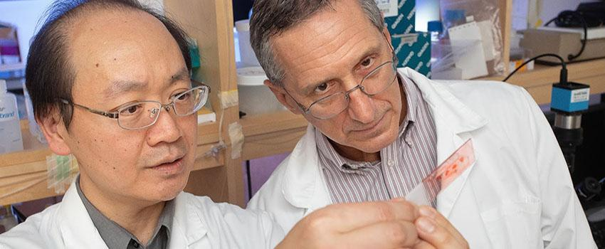 Dr. Mike Lin, left, and Dr. Ron Balczon work in Dr. Lin's lab at the USA College of Medicine. They are conducting research into a possible link between hospital-acquired bacterial pneumonia and cognitive impairment.