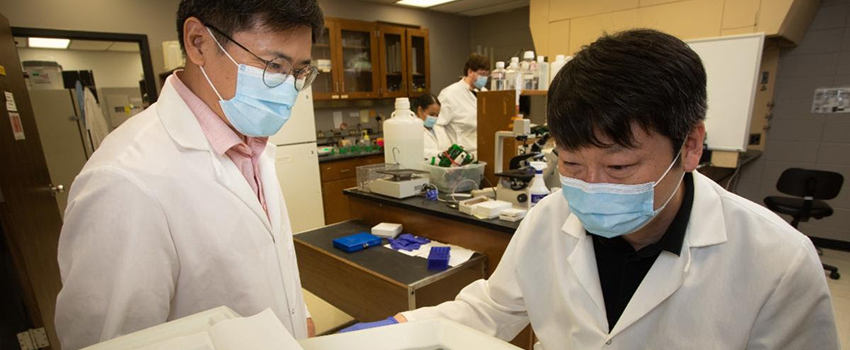 The project led by Steve Lim, Ph.D., is aimed at reducing plaque-building macrophages by inhibiting focal adhesion kinase activity.