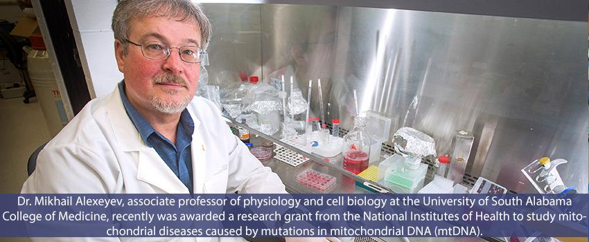 Dr. Mikhail Alexeyev, associate professor of physiology and cell biology at the University of South Alabama College of Medicine, recently was awarded a research grant from the National Institutes of Health to study mitochondrial diseases caused by mutations in mitochondrial DNA (mtDNA).