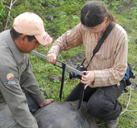 USA Biologists Contribute to Galapagos Tortoise Discovery