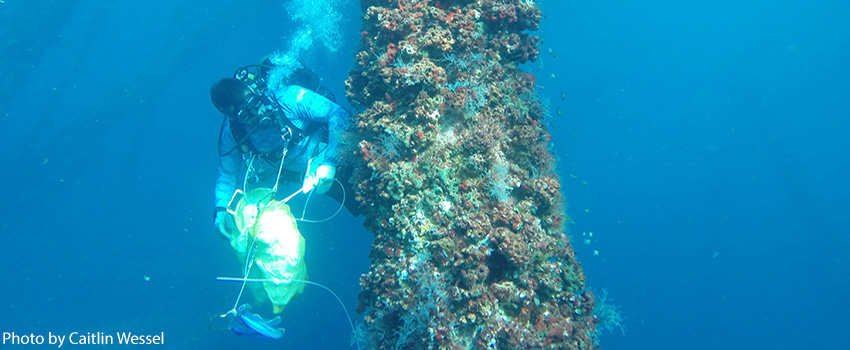 marine biology thesis Marine biology, ms & phd marine biology is an exciting area of graduate study at texas a&m university-corpus christi the marine biology program is designed for students with an interest in one or several sub-disciplines of marine biology who wish to pursue careers in higher education, government, or private industry.