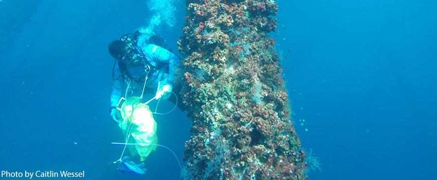 marine biology masters programs