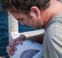 Marine Science Researcher Studies Tiger Sharks