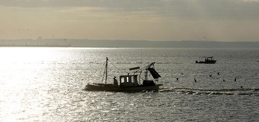 Shrimp Boat on Mobile Bay.
