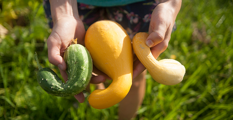 The first produce of the season is being harvested from the garden, located on the west side of campus.