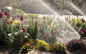 """""""Don't create a false environment for your plants,"""" said Gary Carley, South's landscaping manager. Dig a hole, plant and be confident."""