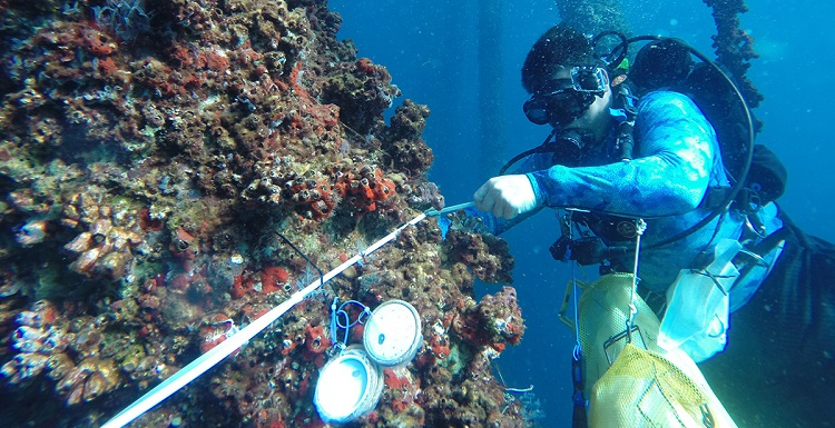 University of South Alabama doctoral student Grant Lockridge uses passive samplers in monitoring studies being done along the northern Gulf of Mexico.