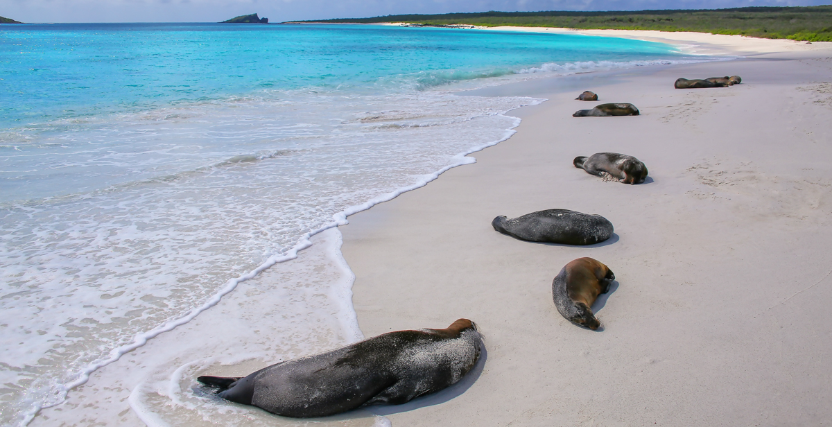 Galapagos sea lions resting in Galapagos National Park.