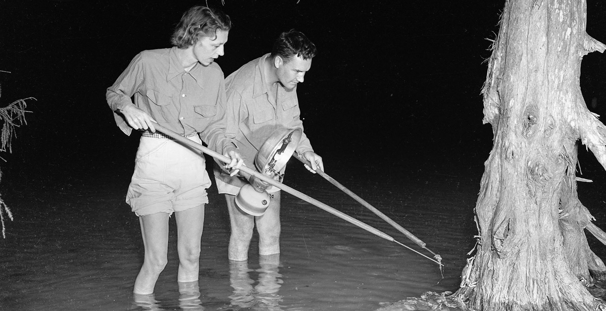 Residents hunt for seafood during a Jubilee in this 1950 photo that is part of the Thigpen Photography Collection.