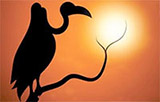 silhouette of stork on a branch