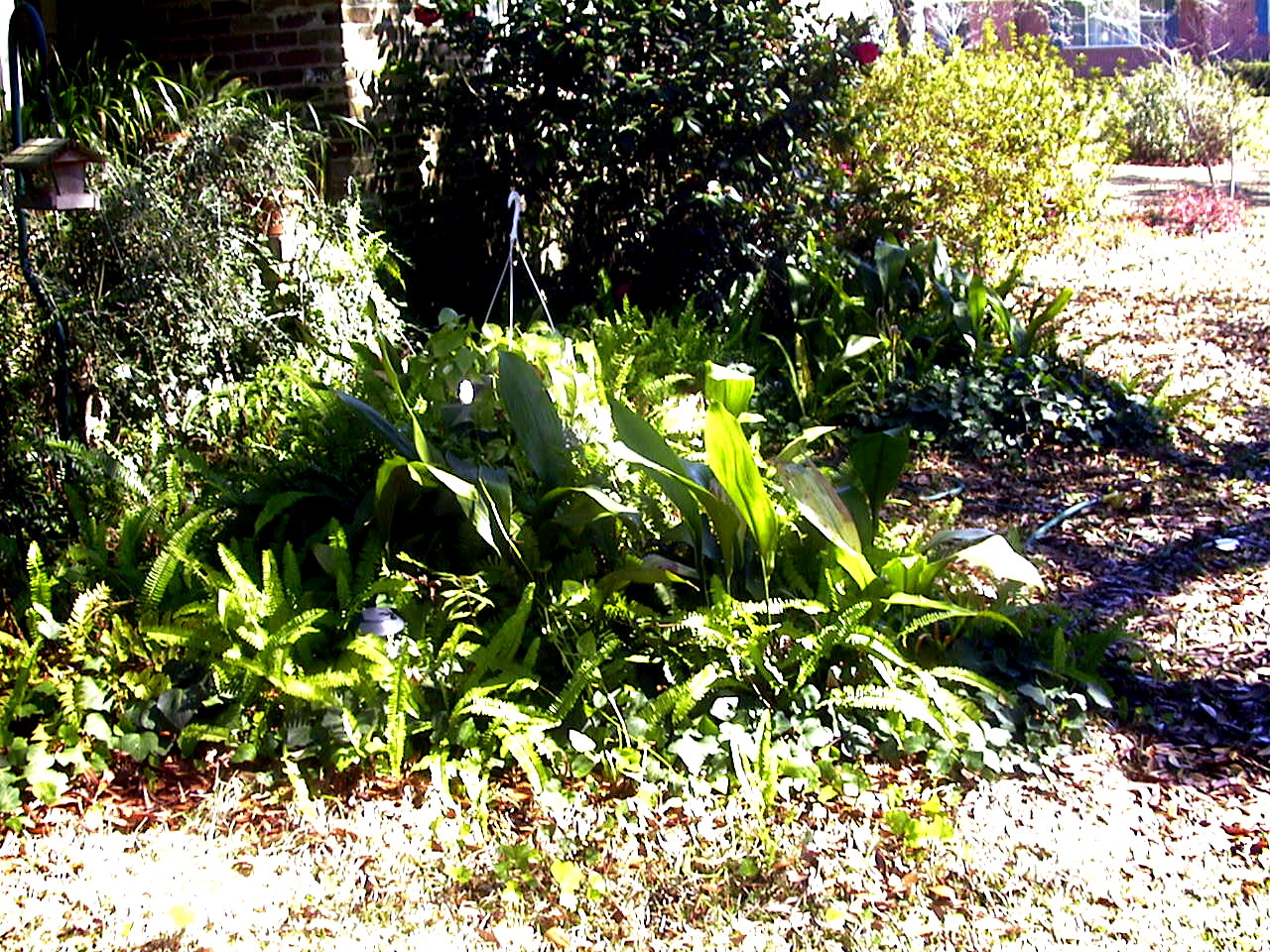 My garden on a lovely spring day in Mobile. (We get 2 every year!)