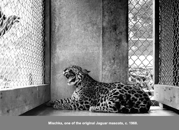 One of the original jaguar mascot