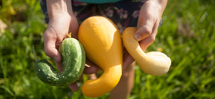 three yellow and green squash